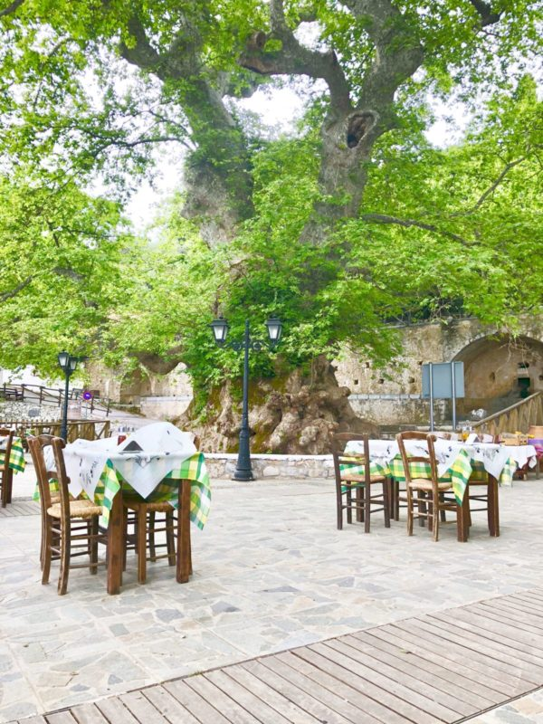 Größte Platane auf Kreta in Krasi